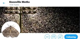 Knoxville Moths