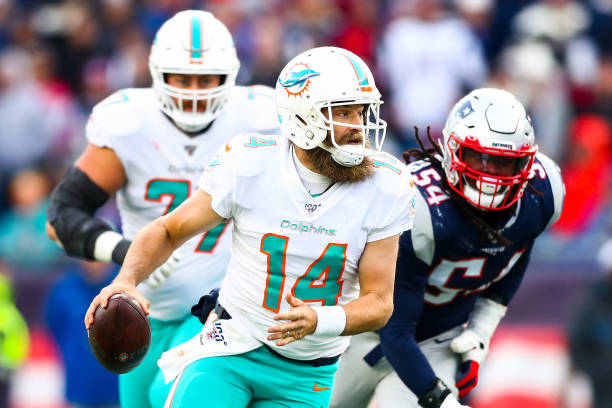 Dolphins Report Card